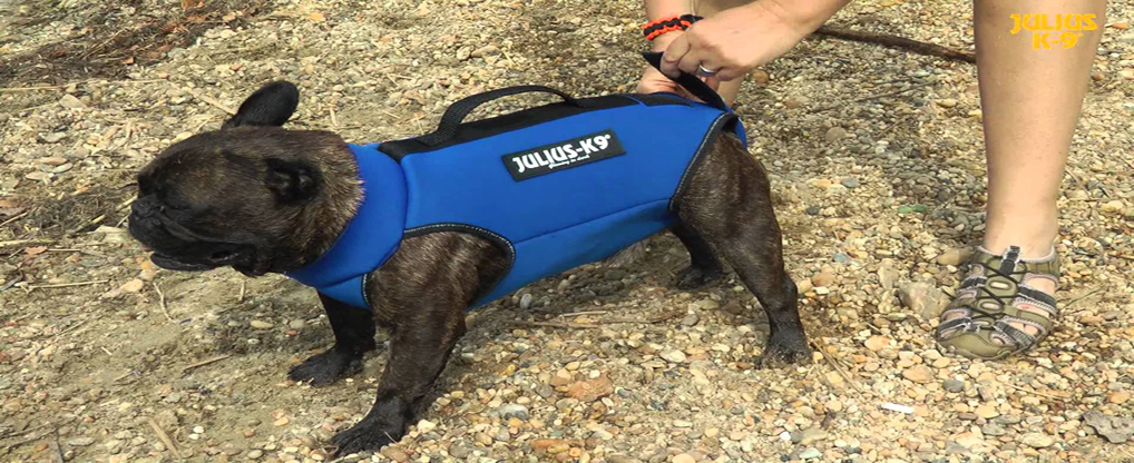Buy Life jacket for your French bulldog